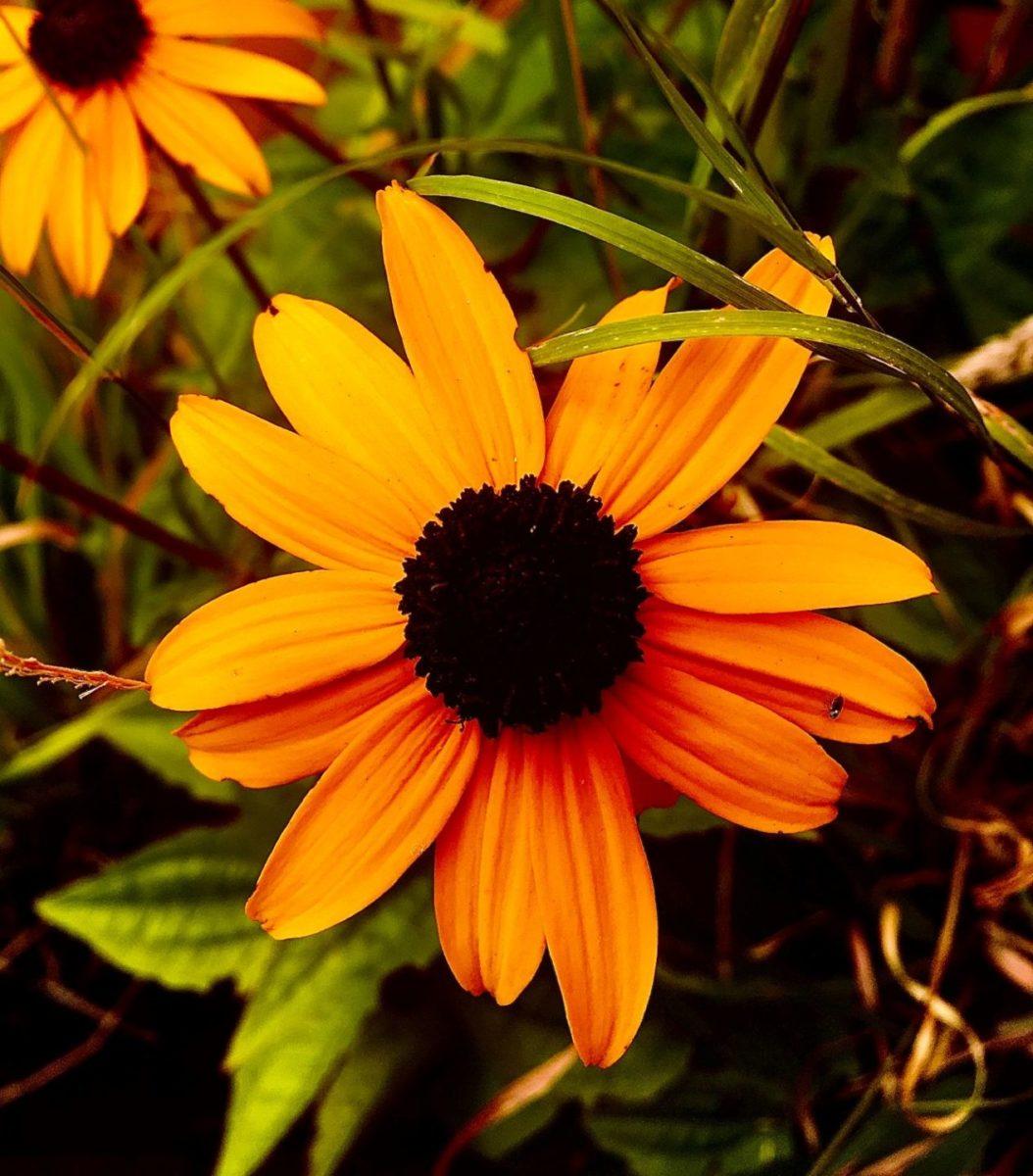 Gelbe Blume - Nabel der Welt